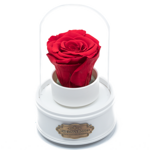 Red Preserved Rose|The Only Regular White Music Globe - The Only Roses