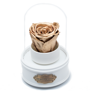 Gold Preserved Rose|The Only Regular White Music Globe - The Only Roses