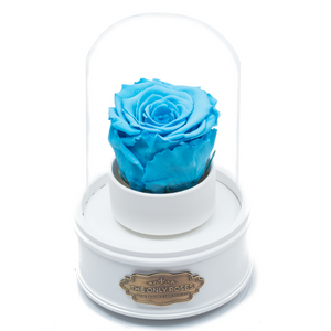 Blue Preserved Rose|The Only Regular White Music Globe - The Only Roses
