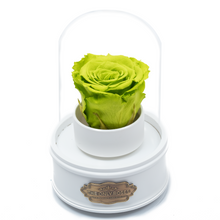 Load image into Gallery viewer, Green Preserved Rose|The Only Regular White Music Globe - The Only Roses