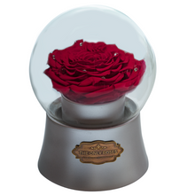 Load image into Gallery viewer, Red Preserved Rose|The Only Large Silver Music Globe - The Only Roses