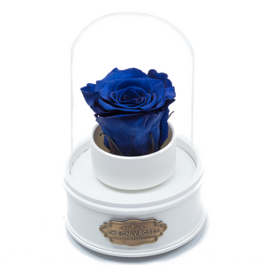 Royal Blue Preserved Rose|The Only Regular White Music Globe - The Only Roses