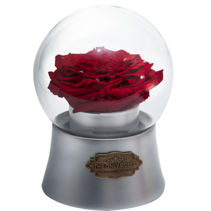 Red Preserved Rose|The Only Large Silver Music Globe - The Only Roses