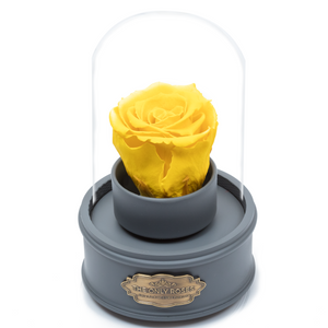 Yellow Preserved Rose|The Only Regular Grey Music Globe - The Only Roses