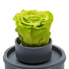 Load image into Gallery viewer, Green Preserved Rose|The Only Regular Grey Music Globe - The Only Roses