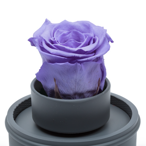 Purple Preserved Rose|The Only Regular Grey Music Globe - The Only Roses