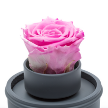 Load image into Gallery viewer, Pink Preserved Rose|The Only Regular Grey Music Globe - The Only Roses