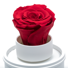 Load image into Gallery viewer, Red Preserved Rose|The Only Regular White Music Globe - The Only Roses