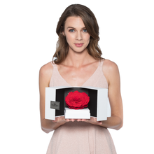 Load image into Gallery viewer, Dark Purple Mega Preserved Rose | Swing Opening Box - The Only Roses