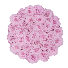 Load image into Gallery viewer, Baby Pink Preserved Roses | Medium Round White Huggy Rose Box - The Only Roses