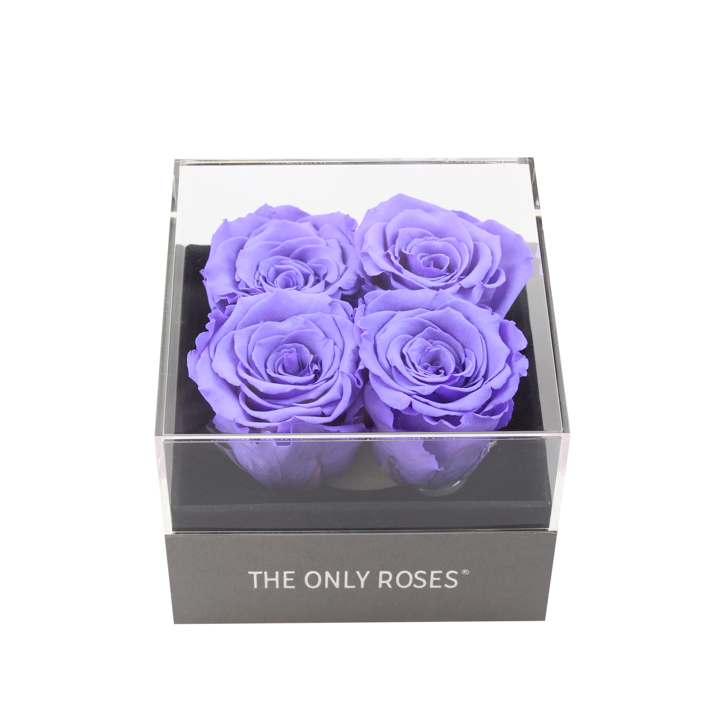 Purple Preserved Roses | Small Square Classic Grey Box - The Only Roses