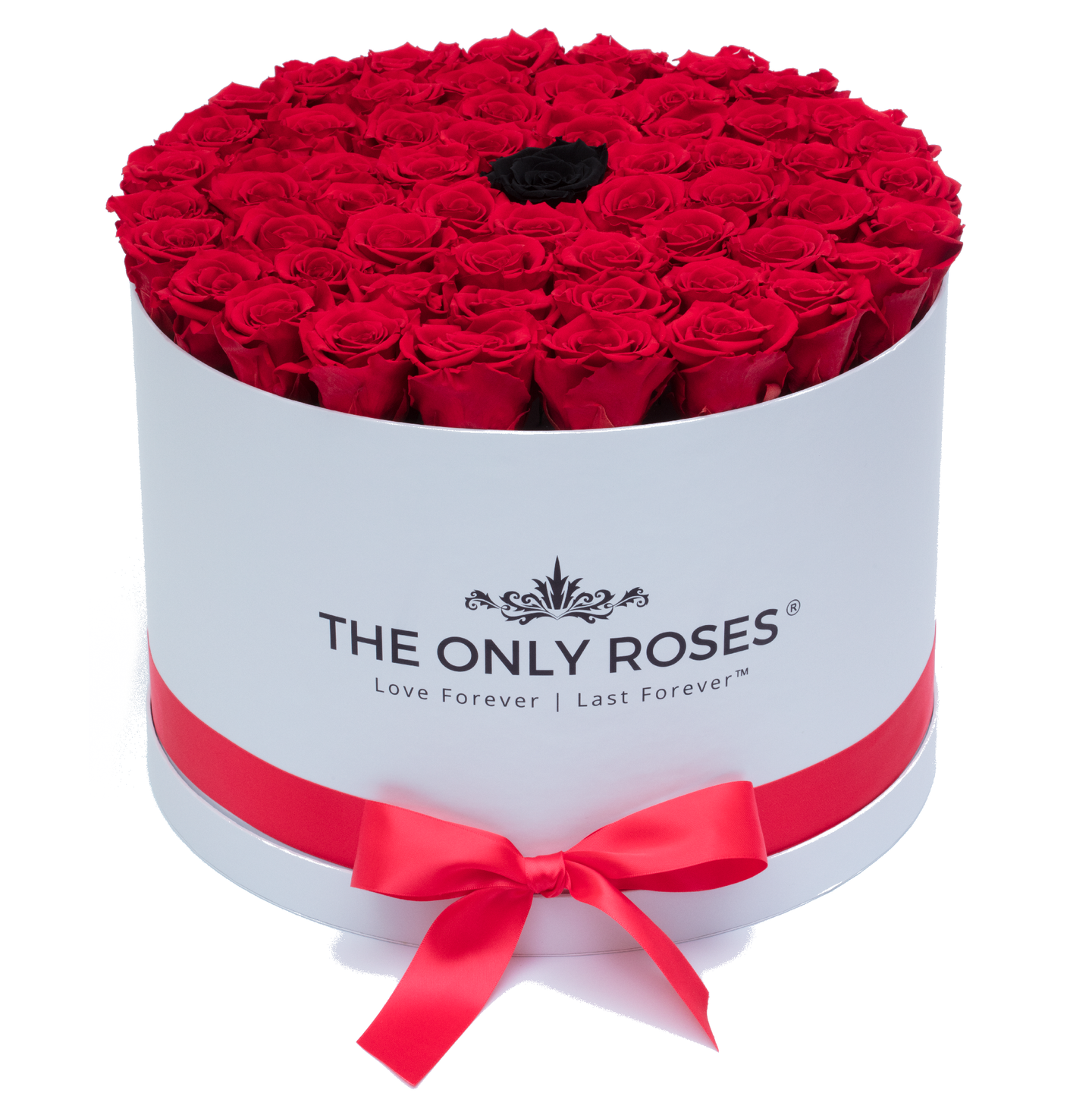 Red & Black Preserved Roses | Large Round White Huggy Rose Box - The Only Roses