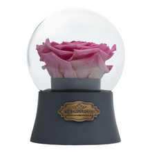 Load image into Gallery viewer, Pink Preserved Rose|The Only Large Grey Music Globe - The Only Roses
