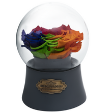 Load image into Gallery viewer, Rainbow Preserved Rose|The Only Large Grey Music Globe - The Only Roses