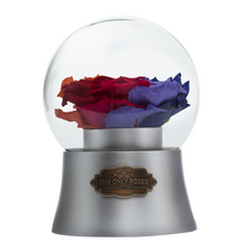 Load image into Gallery viewer, Rainbow Preserved Rose|The Only Large Silver Music Globe - The Only Roses