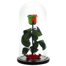 Load image into Gallery viewer, Rainbow Preserved Rose | Beauty and The Beast Glass Dome - The Only Roses