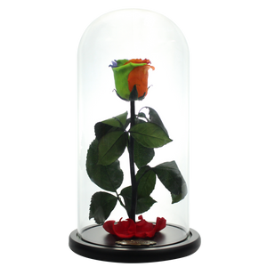 Rainbow Preserved Rose | Beauty and The Beast Glass Dome - The Only Roses