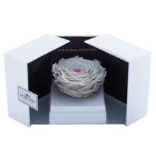 Load image into Gallery viewer, White & Pink Mega Preserved Rose | Swing Opening Box - The Only Roses