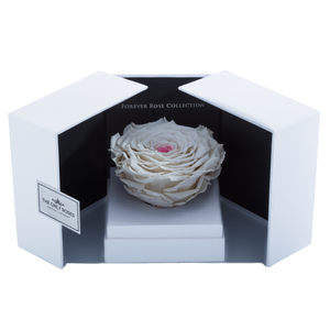 White & Pink Mega Preserved Rose | Swing Opening Box - The Only Roses