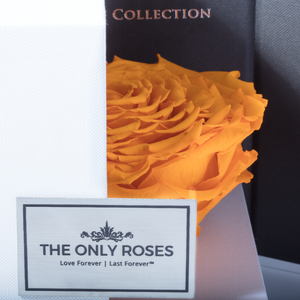 Yellow Mega Preserved Rose | Swing Opening Box - The Only Roses
