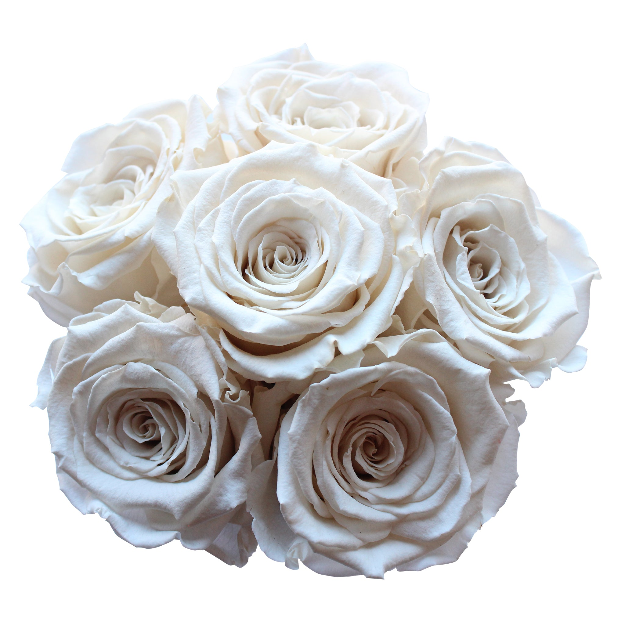 White Preserved Roses | Small White Round Rose Hat Box