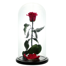 Load image into Gallery viewer, Watermelon Red Preserved Rose | Beauty and The Beast Glass Dome