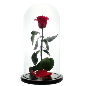 Watermelon Red Preserved Rose | Beauty and The Beast Glass Dome