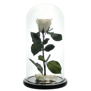 White Preserved Rose | Beauty and The Beast Glass Dome