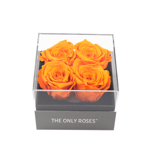 Orange Preserved Roses | Small Square Classic Grey Box - The Only Roses