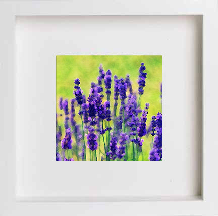 Watercolour Floral Lilac Prairie Flowers 0269