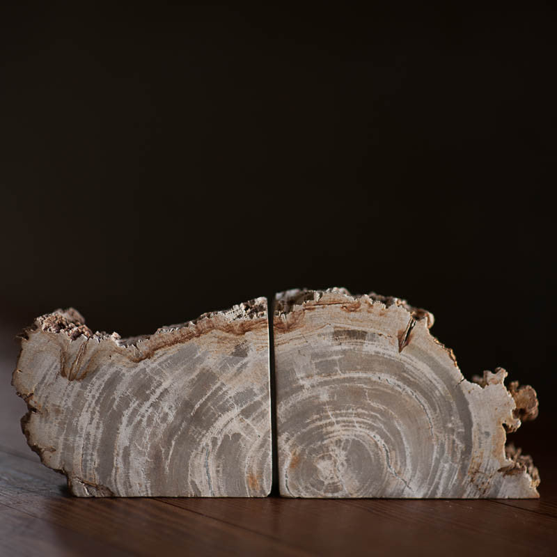 Petrified Wood Bookends LG Bookends RTP - Stash Co