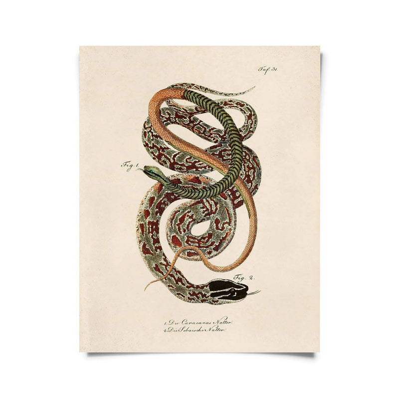 Natural History | French Snake Zoology 2