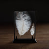 Feather Frame | White Frame V. Vintage - Stash Co