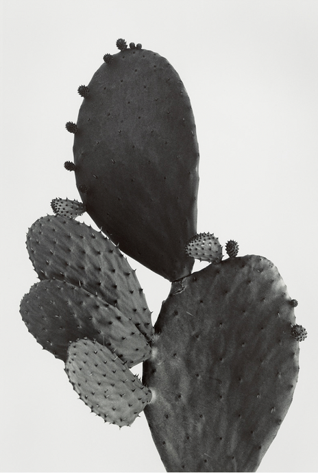 Kelly Geddes, Prickly Pear, in collaboration with Christelle Scifo, 2018, $875 AUD