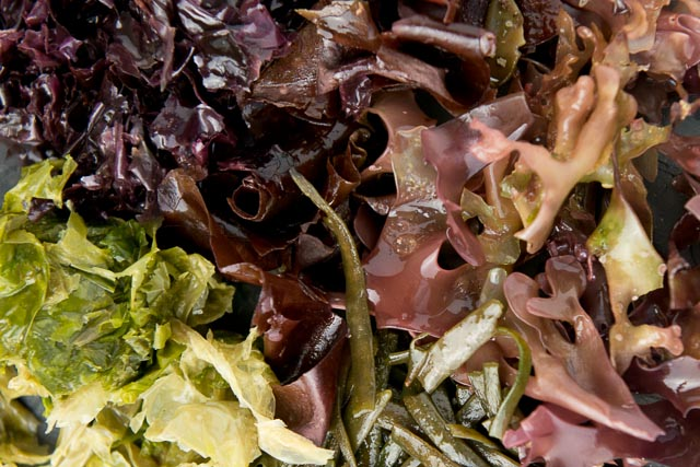 What Are The Benefits Of Seaweed And How Can You Use It In Your Cooking?