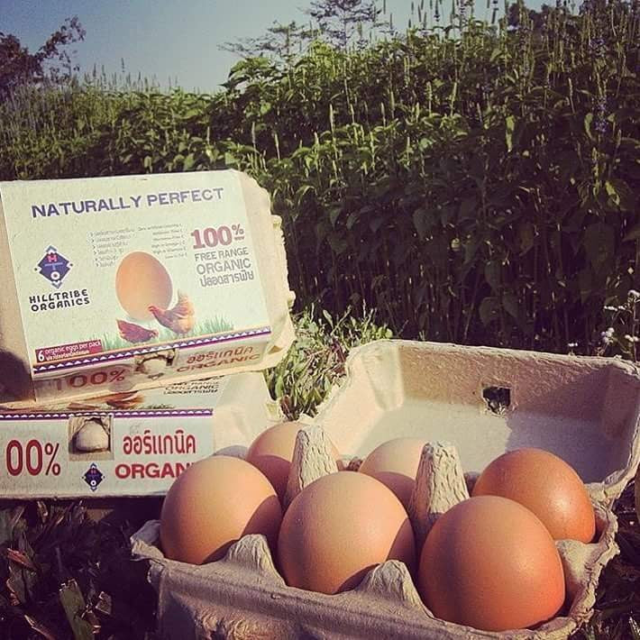 Organic Free-Range Eggs (6 Eggs Box) Hilltribe Social Enterprise Subscription