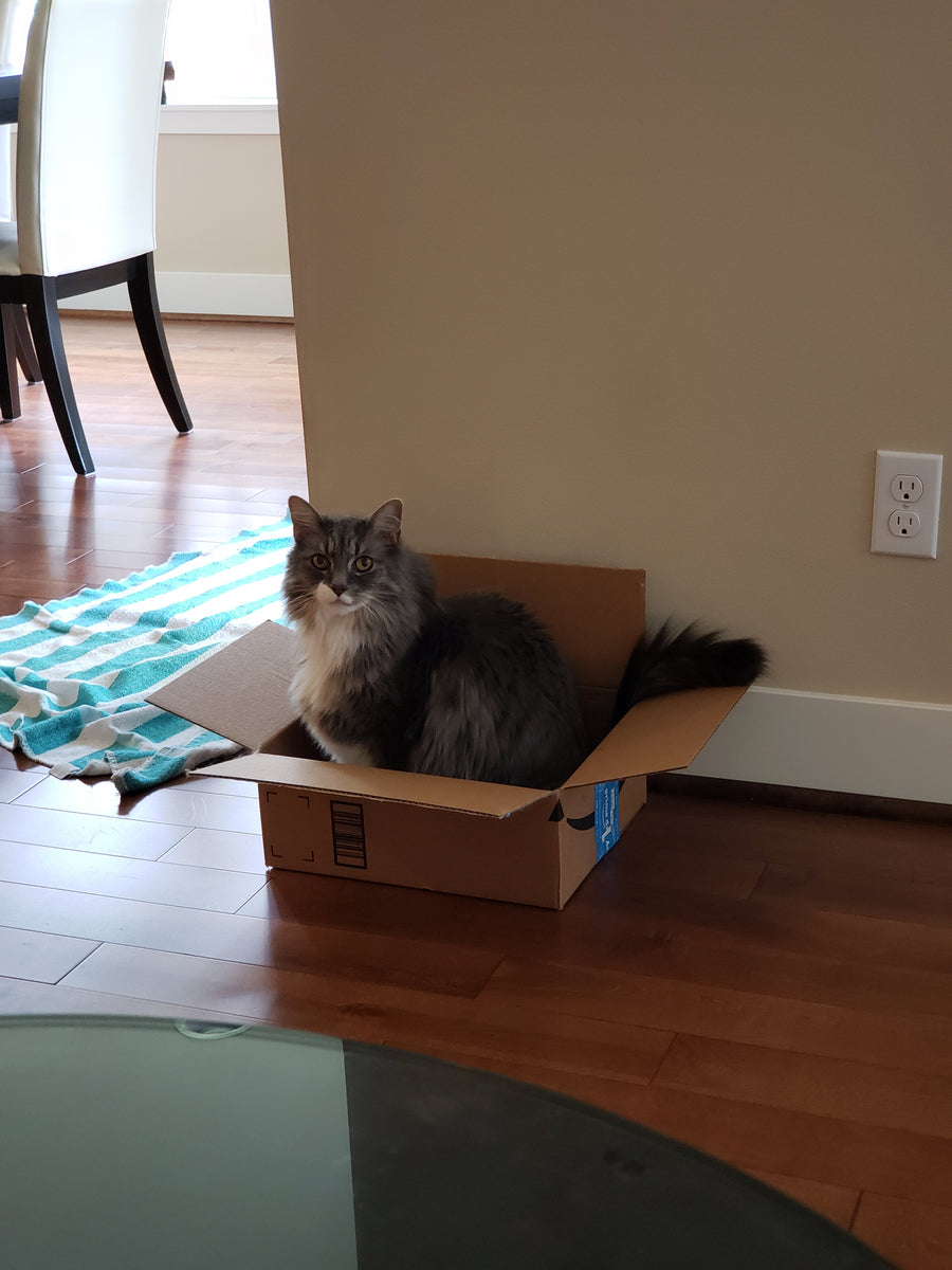 Milo the cat sitting in an Amazon box