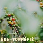 Green coffee (unroasted) Colombia Huila El Pital