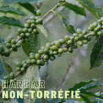 Green coffee (unroasted) Harrar