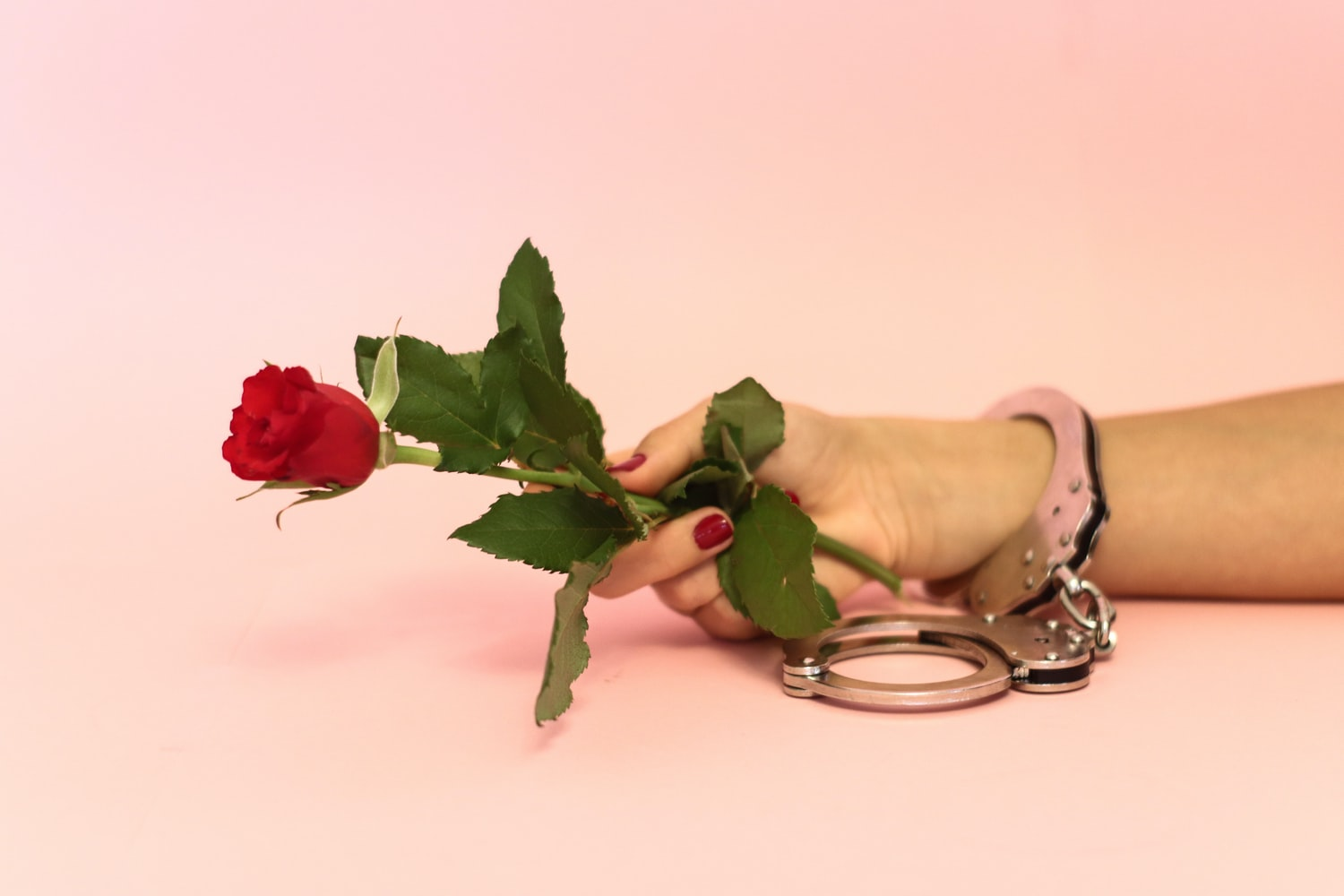 Woman's wrist in handcuffs holding a rose
