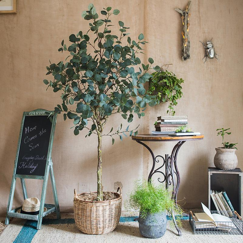 5 Ways to Incorporate Eucalyptus into Your Home This Summer