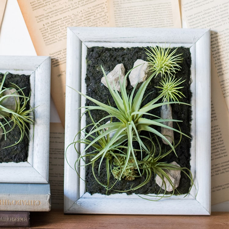 Framed Succulent Wall Art