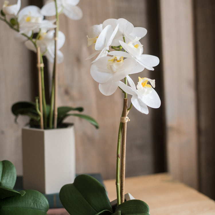 Artificial Flower Real Touch Orchid Plant in Green and White