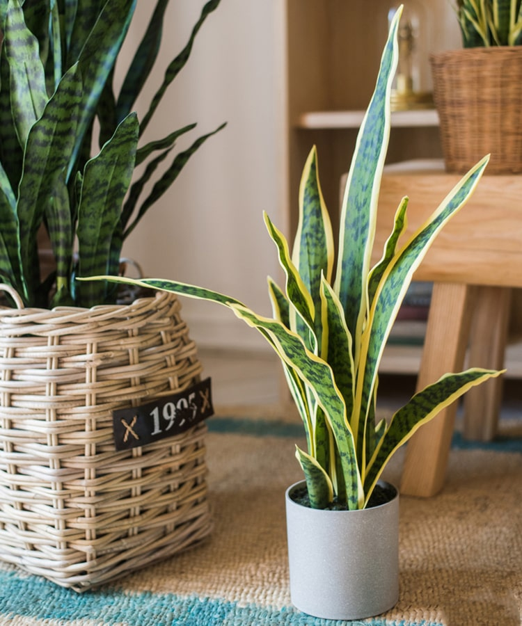 Potted Artificial Snake Plant Yellow Edged Leaf