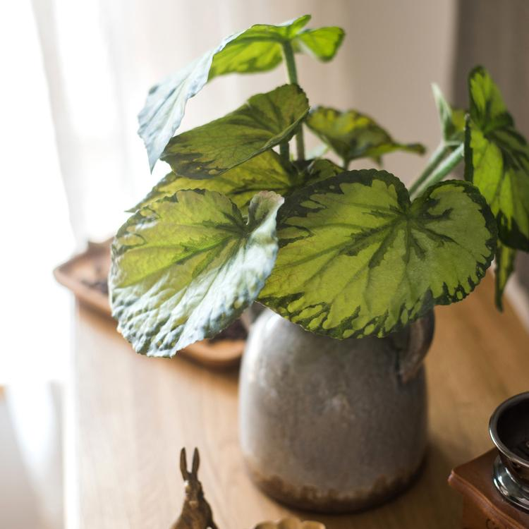 Begonia Leaf in Porcelain Vase Set RusticReach