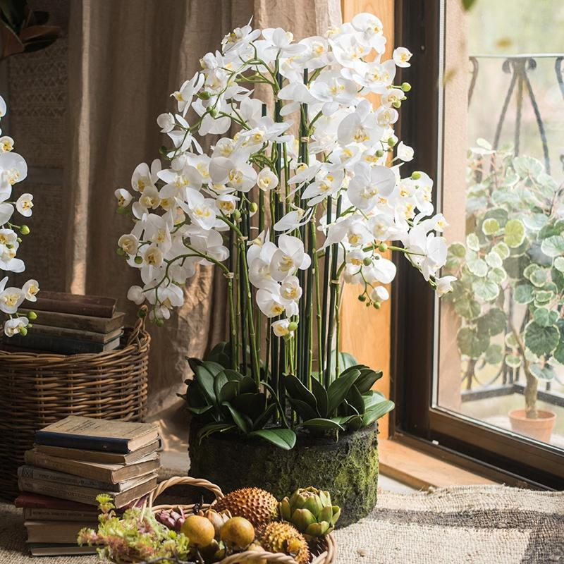 Large Orchid Arrangement in Soil RusticReach