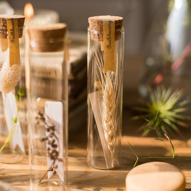 Natural Dried Flower in Glass Tube Randomly Picked Set of 5 RusticReach