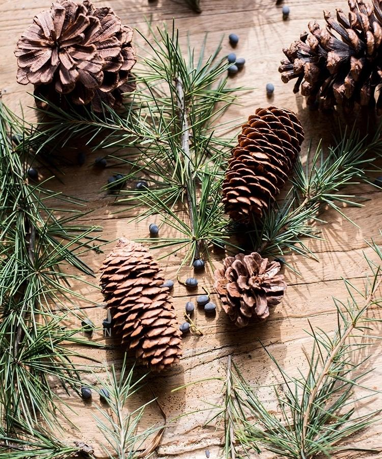Pine Cone Decoration RusticReach