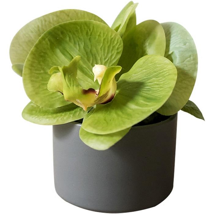 Potted Flower Mini Real Touch Potted Orchid in Green RusticReach
