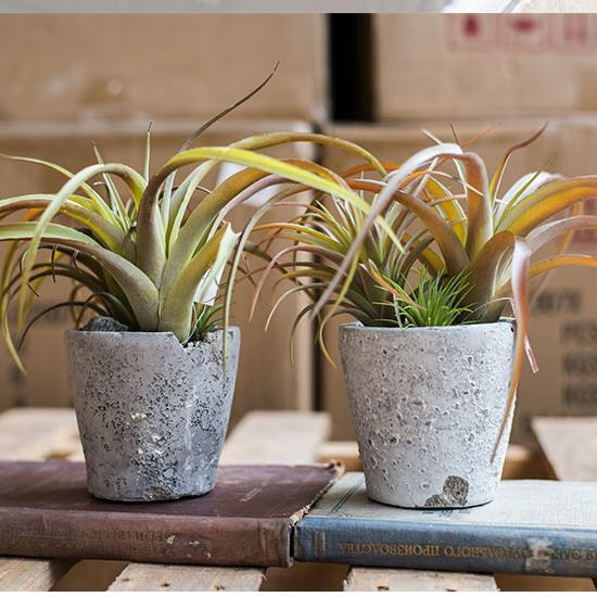 "Potted Plant Tillandsia in Cement Planter 12"" Tall RusticReach"